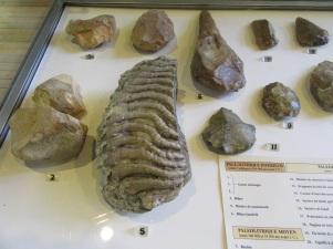 Dent de mammouth