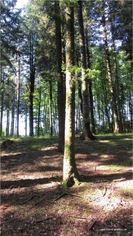 forêt bibracte